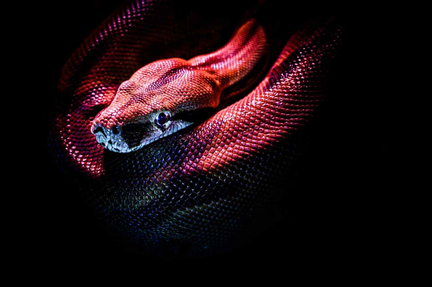 Python image from pexels